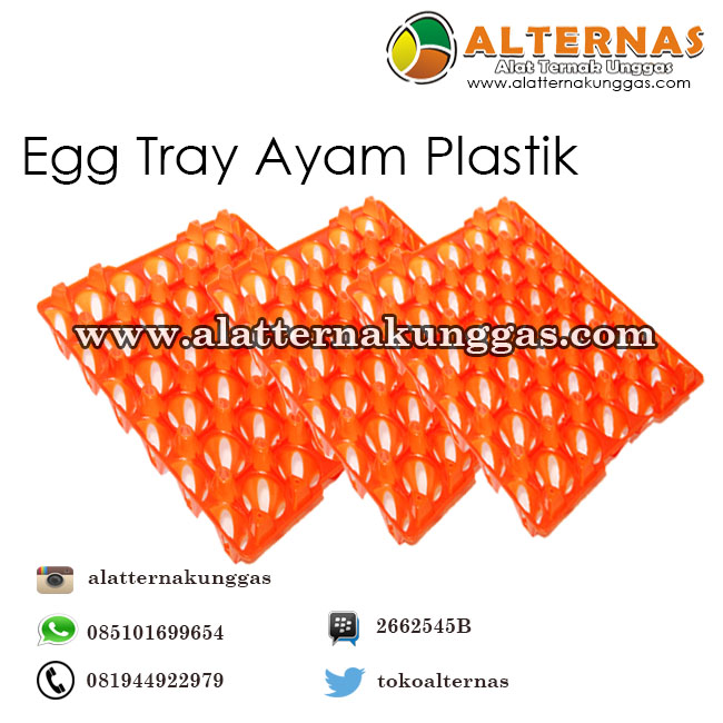 egg tray ayam plastik